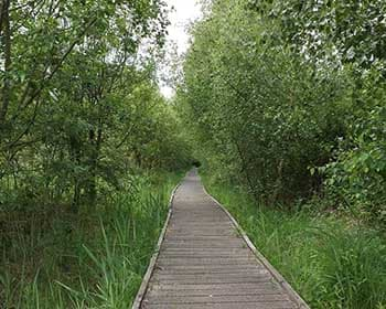 Lattersey Nature Reserve