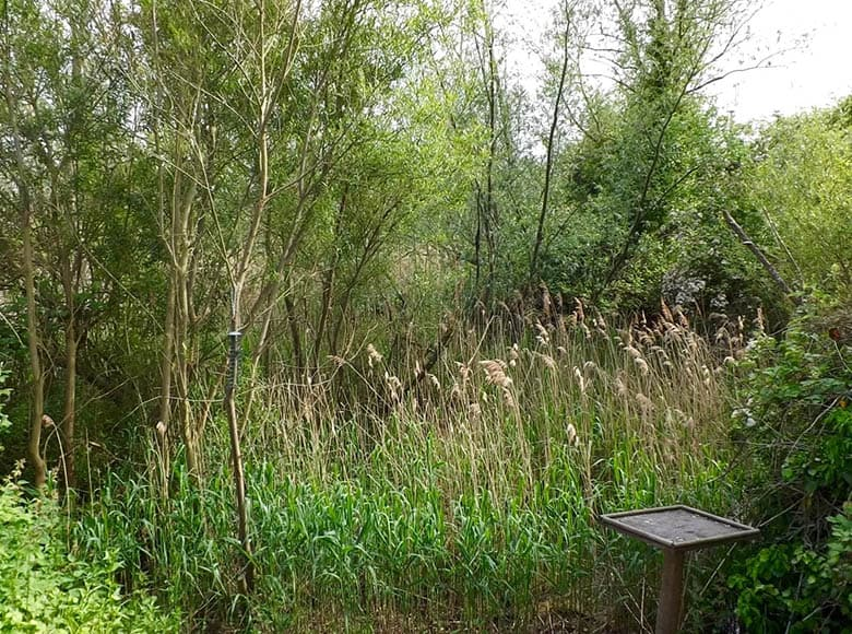 Norwood Road Nature Reserve