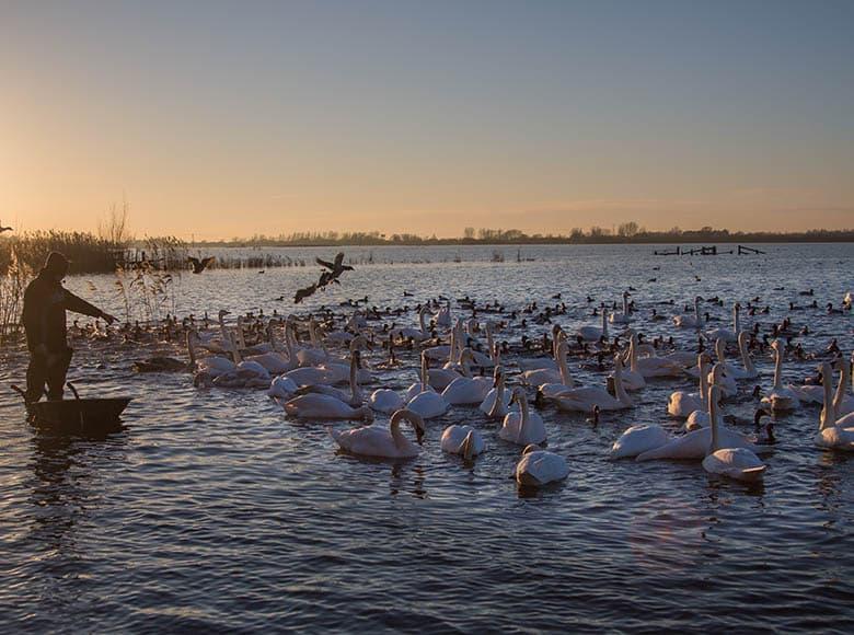 Welney Wetland Centre